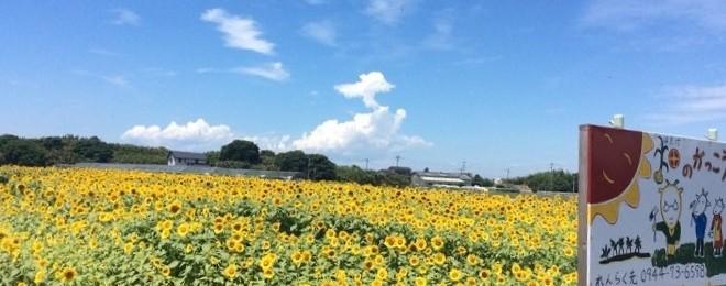 soyokazehimawari20150709